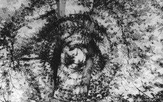 Triple exposure of trees